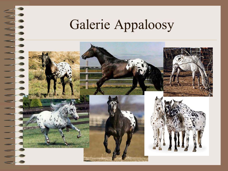 Galerie Appaloosy