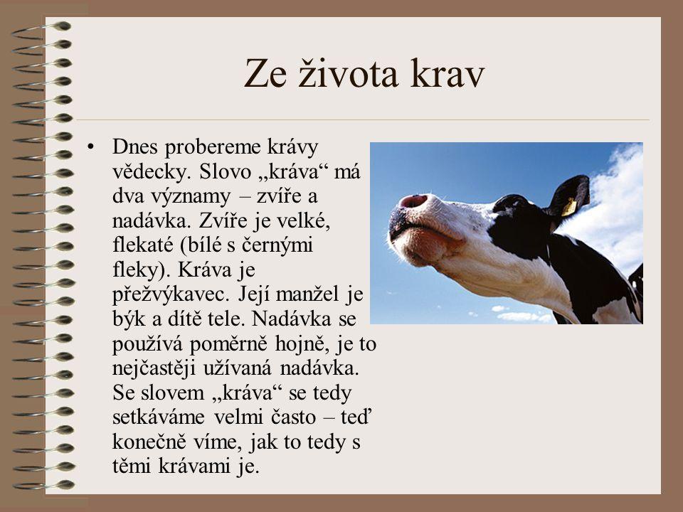 """Ze života krav Dnes probereme krávy vědecky. Slovo """"kráva"""" má dva významy – zvíře a nadávka. Zvíře je velké, flekaté (bílé s černými fleky). Kráva je"""
