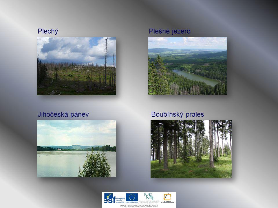 Plechý Boubínský pralesJihočeská pánev Plešné jezero