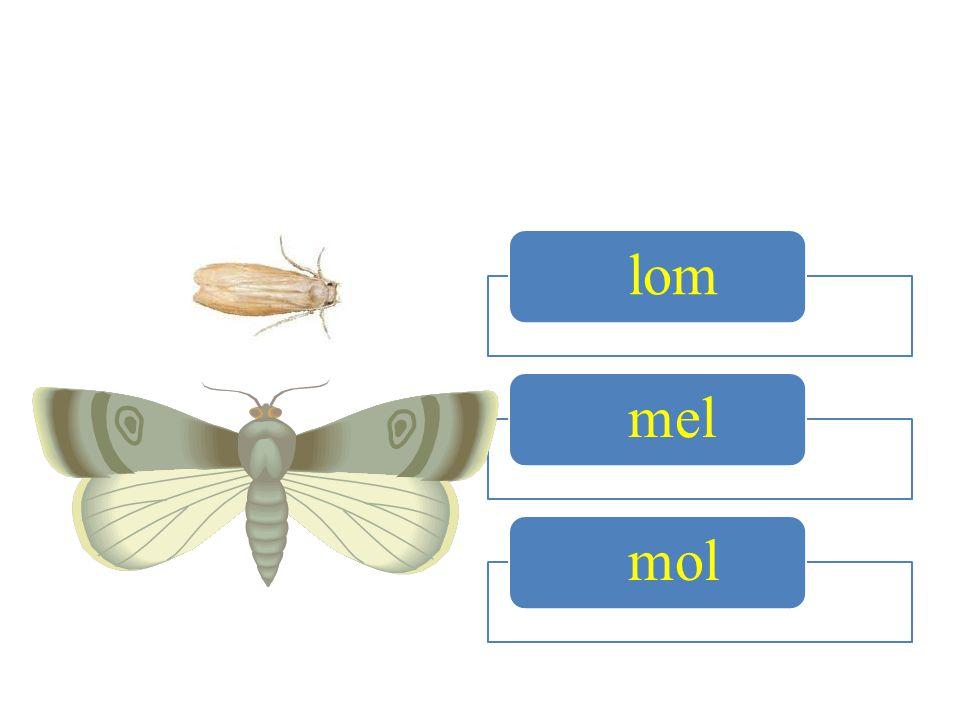 lom mel mol