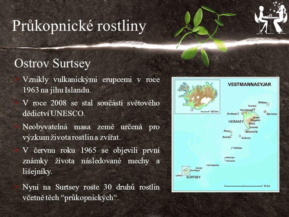 Průkopnické rostliny Ostrov Surtsey > Vznikly vulkanickými erupcemi v roce 1963 na jihu Islandu.