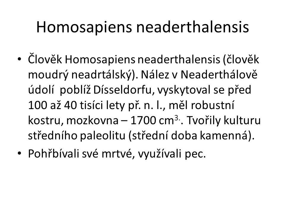 Homosapiens neaderthalensis Člověk Homosapiens neaderthalensis (člověk moudrý neadrtálský). Nález v Neaderthálově údolí poblíž Dísseldorfu, vyskytoval