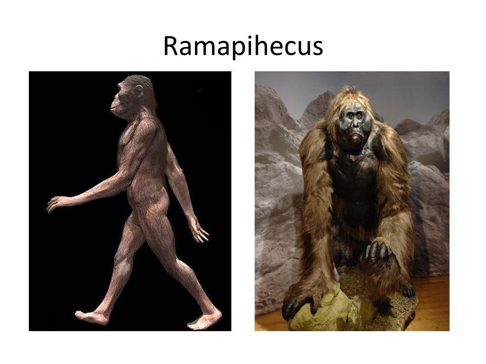 Ramapihecus