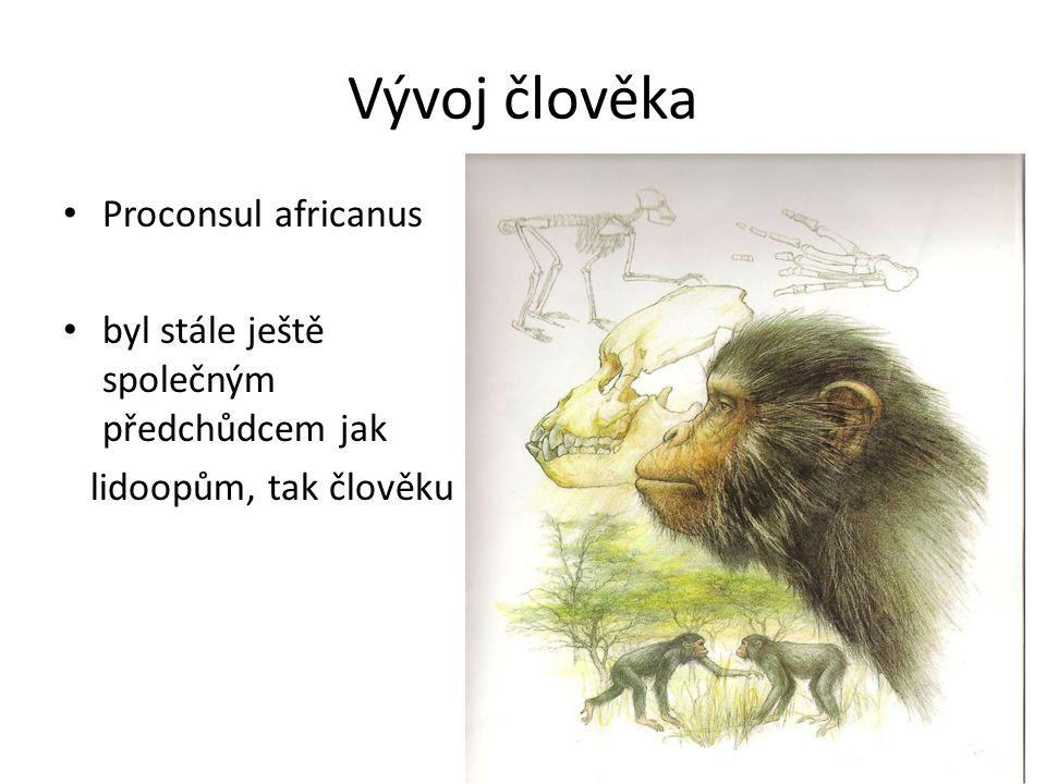 Vývoj člověka Proconsul africanus byl stále ještě společným předchůdcem jak lidoopům, tak člověku