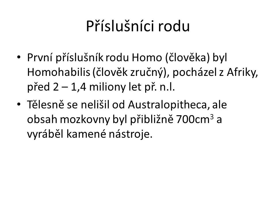 Příslušníci rodu První příslušník rodu Homo (člověka) byl Homohabilis (člověk zručný), pocházel z Afriky, před 2 – 1,4 miliony let př. n.l. Tělesně se