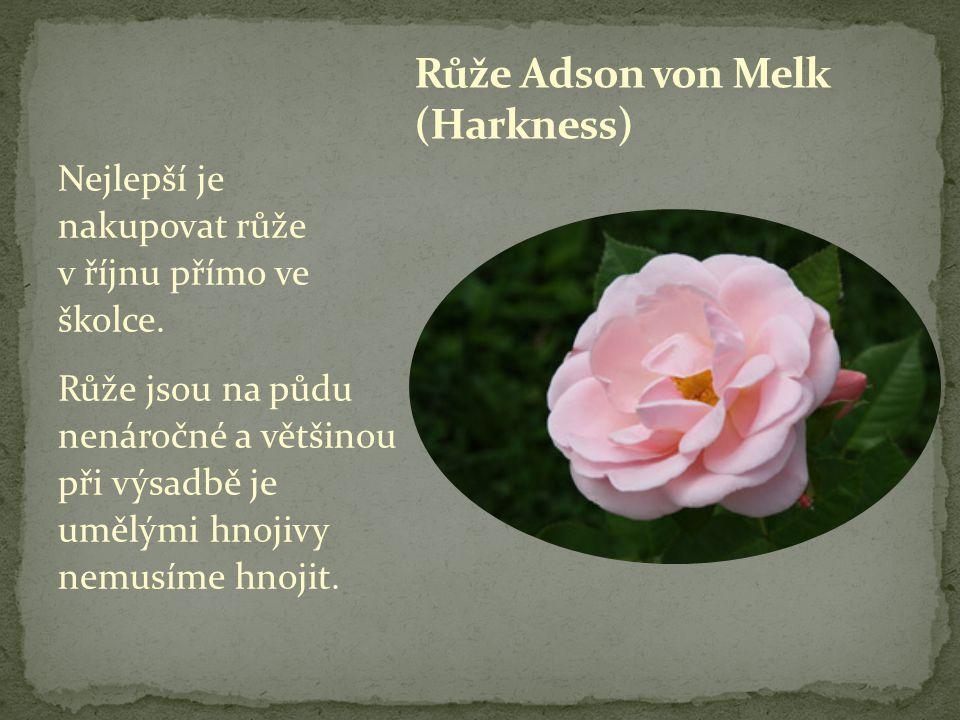 Nejlepší je nakupovat růže v říjnu přímo ve školce. Růže jsou na půdu nenáročné a většinou při výsadbě je umělými hnojivy nemusíme hnojit.
