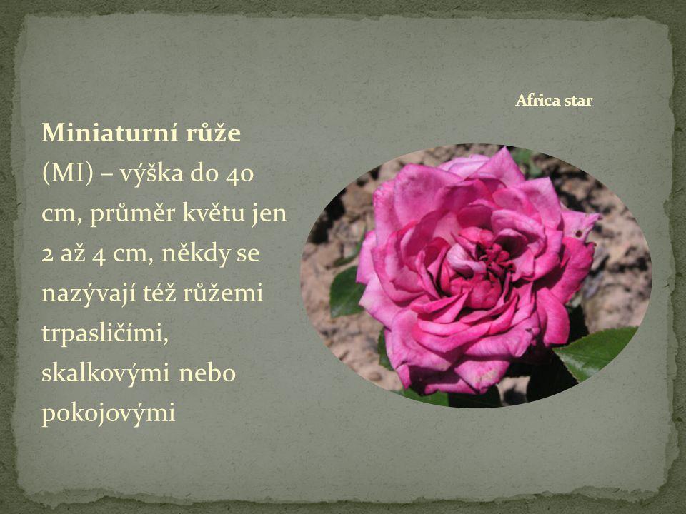 Botanické růže– původní druhy a typy jim blízké, většinou robustní keře s prázdným květem, někdy jsou přiřazovány k sadovým růžím