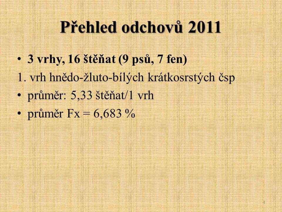 Přehled odchovů 2011 3 vrhy, 16 štěňat (9 psů, 7 fen) 1. vrh hnědo-žluto-bílých krátkosrstých čsp průměr: 5,33 štěňat/1 vrh průměr Fx = 6,683 % 4