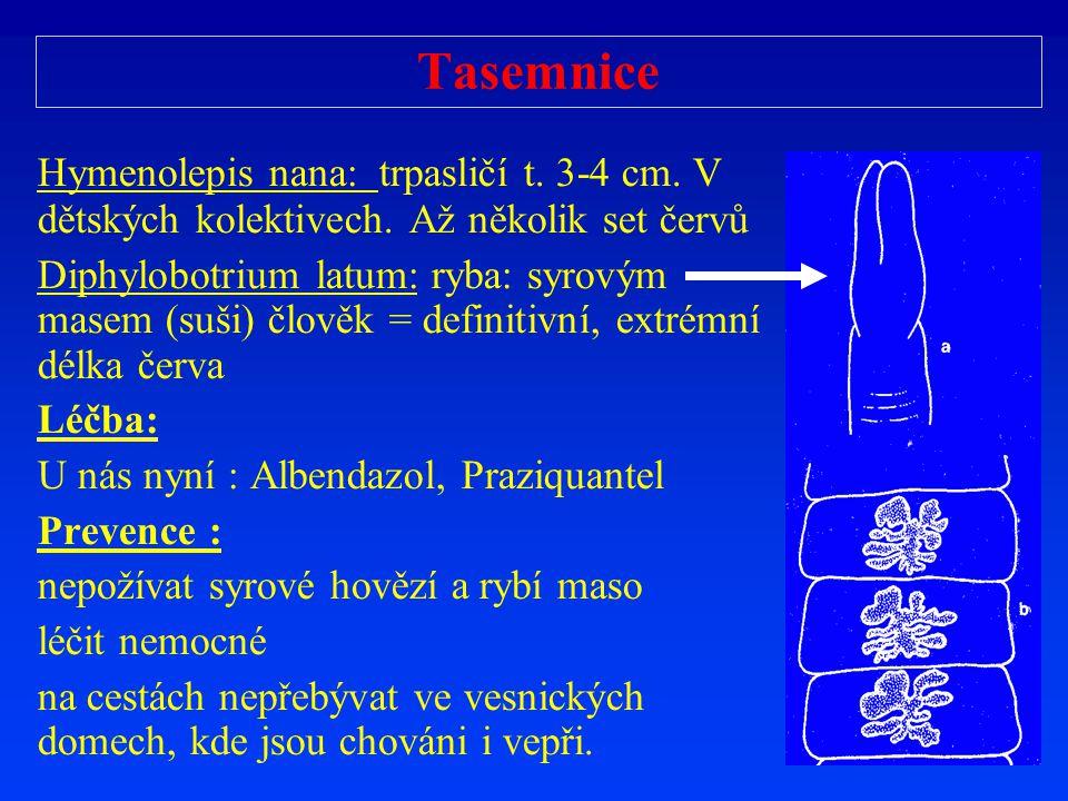 Tasemnice Hymenolepis nana: trpasličí t. 3-4 cm. V dětských kolektivech. Až několik set červů Diphylobotrium latum: ryba: syrovým masem (suši) člověk