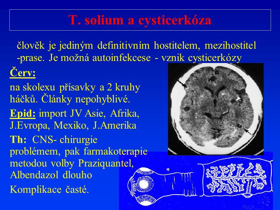 T. solium a cysticerkóza člověk je jediným definitivním hostitelem, mezihostitel -prase. Je možná autoinfekcese - vznik cysticerkózy Červ: na skolexu