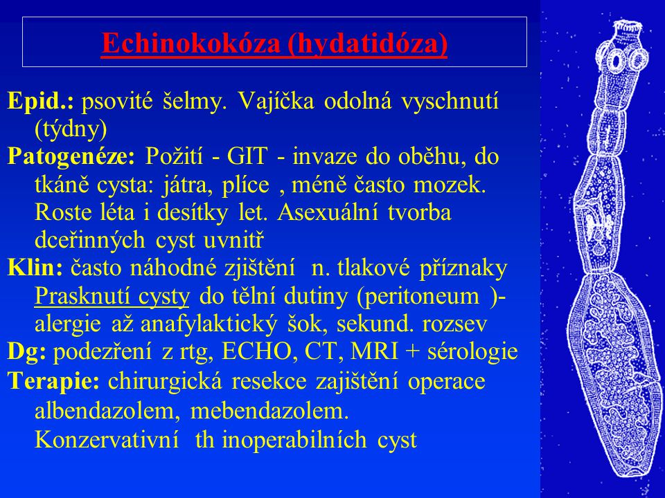 Echinokokóza (hydatidóza) Epid.: psovité šelmy. Vajíčka odolná vyschnutí (týdny) Patogenéze: Požití - GIT - invaze do oběhu, do tkáně cysta: játra, pl