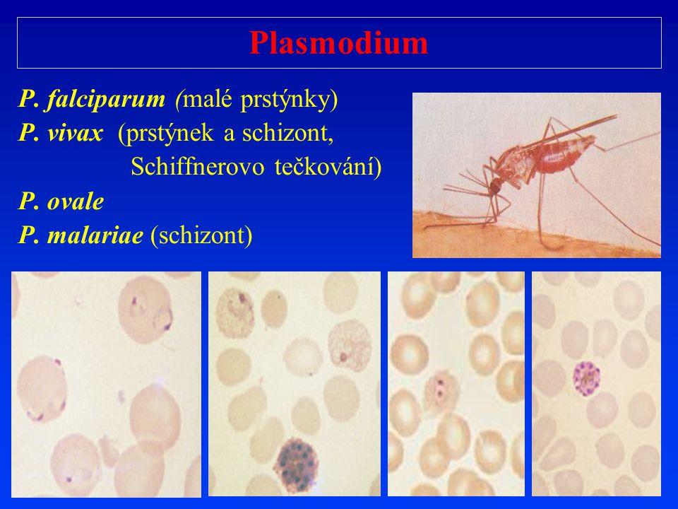 Plasmodium P. falciparum (malé prstýnky) P. vivax (prstýnek a schizont, Schiffnerovo te č kování) P. ovale P. malariae (schizont)