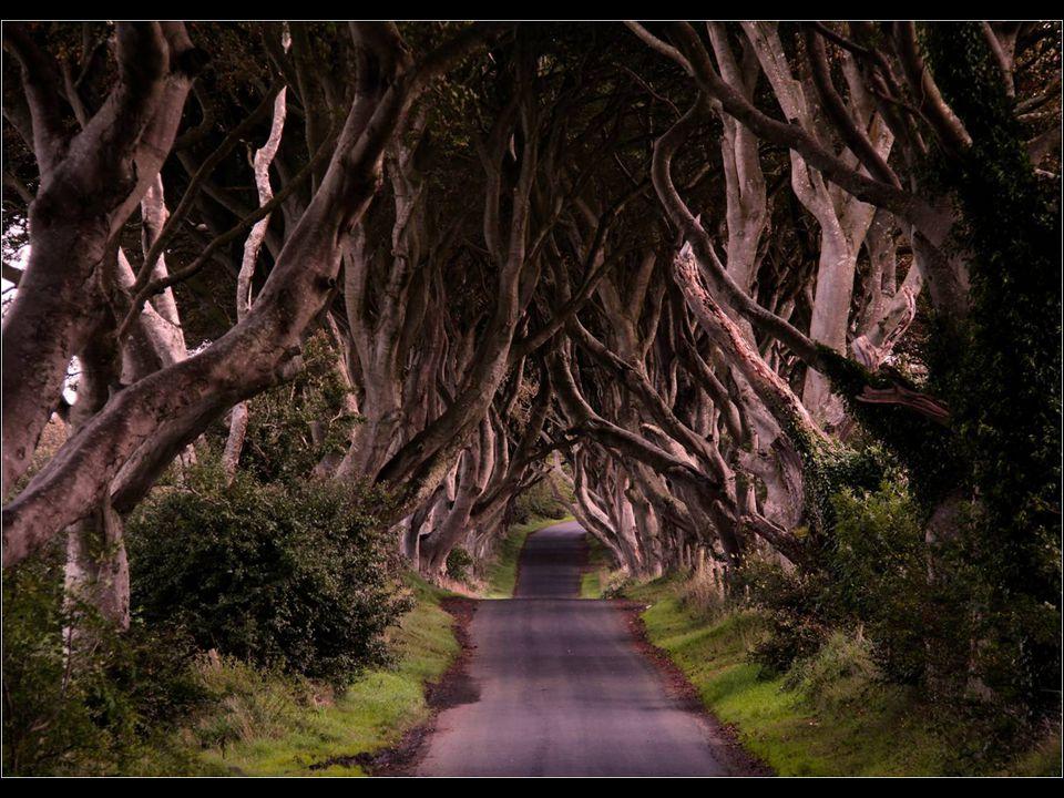 1. Cesta z pohádek (Dark Hedges, Severní Irsko)