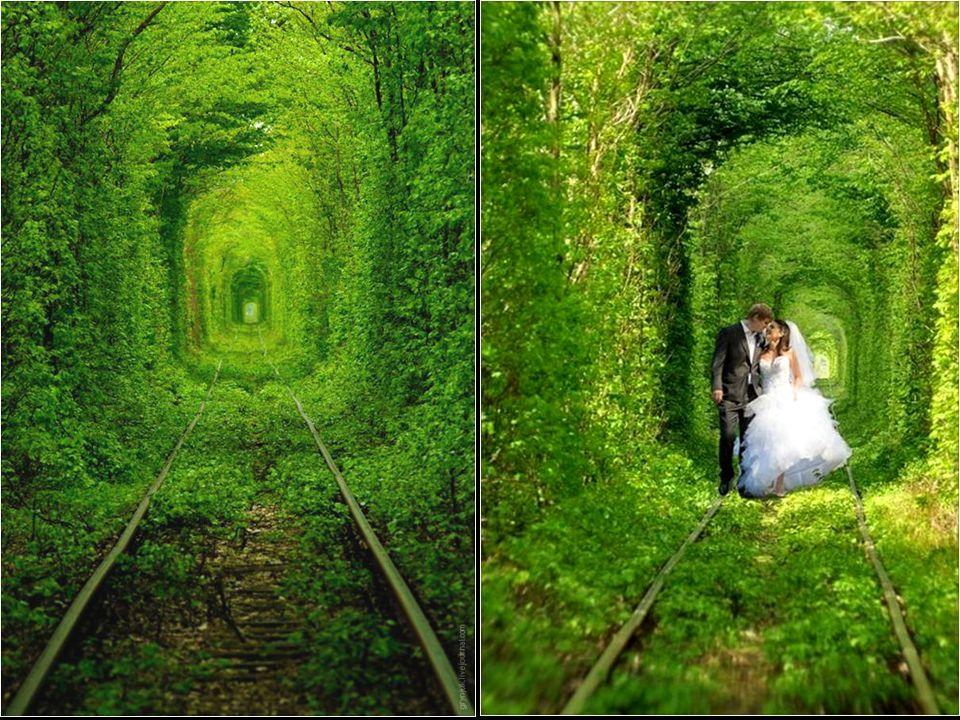 Na okraji malého m ě ste č ka Klevan na Ukrajin ě vede lesem ú ž asná, perfektn ě tvarovaná p ř írodní pasá ž, vytvo ř ená v hustém porostu listnatých