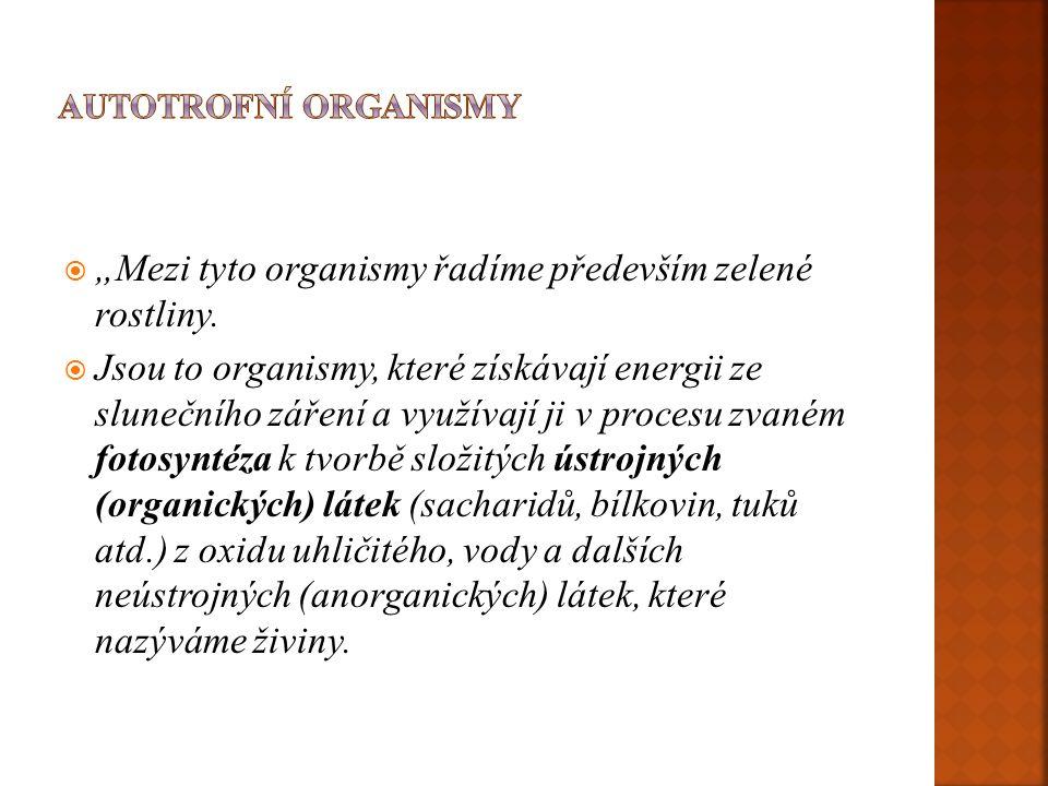 """ """"Mezi tyto organismy řadíme především zelené rostliny."""