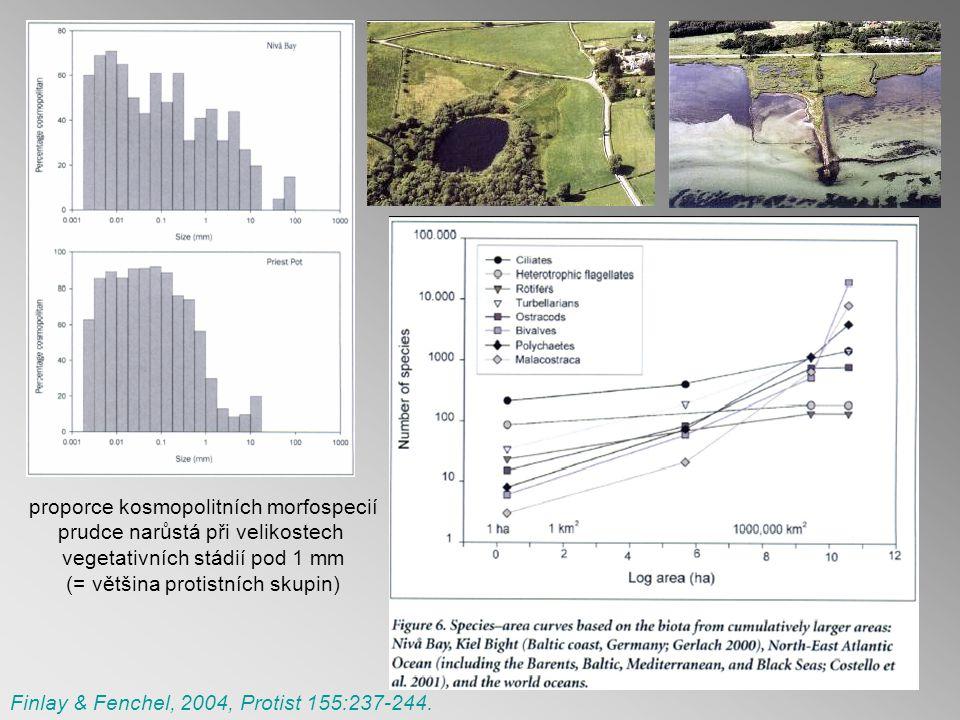 proporce kosmopolitních morfospecií prudce narůstá při velikostech vegetativních stádií pod 1 mm (= většina protistních skupin) Finlay & Fenchel, 2004, Protist 155:237-244.