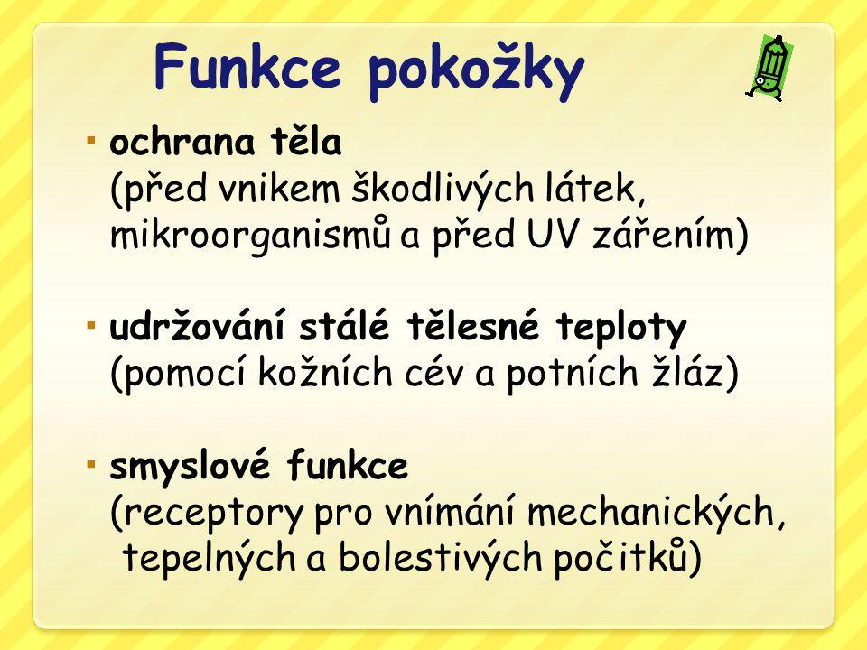 Potní – pot:ochlazuje tělo odpadní látky 0,5-1 litr denně Mazové – maz: chrání pokožku, vlasy a chlupy Pachové – charakteristický zápach Mléčné – dívky puberta - SAVCI