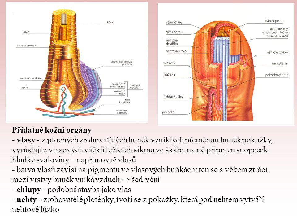 Zdroje obrázků: http://www.004.cz/z-kuze/kuze.jpg http://skolajecna.cz/biologie/Images/Textbook/Big/0070000/00178.png http://dujs.dartmouth.edu/wp-content/uploads/Layers-of-Skin.png http://t2.gstatic.com/images?q=tbn:ANd9GcTu0FU7xb8BGRZ7ACQrRAz88 R0QDdkf35mXYLMnIWEzR--NdHVOrQ http://t2.gstatic.com/images?q=tbn:ANd9GcTu0FU7xb8BGRZ7ACQrRAz88 R0QDdkf35mXYLMnIWEzR--NdHVOrQ http://skolaazdomu.wikispaces.com/file/view/File0112.jpg/120415699/576x4 77/File0112.jpg http://skolaazdomu.wikispaces.com/file/view/File0112.jpg/120415699/576x4 77/File0112.jpg http://www.aureamedica.ic.cz/img/v_pece_prsa/obsah00-prs-anatomie.jpg http://skolajecna.cz/biologie/Images/Textbook/Big/0070000/00169.png http://www.ucesyonline.cz/wp-content/gallery/vlasy/rez_vlas.png
