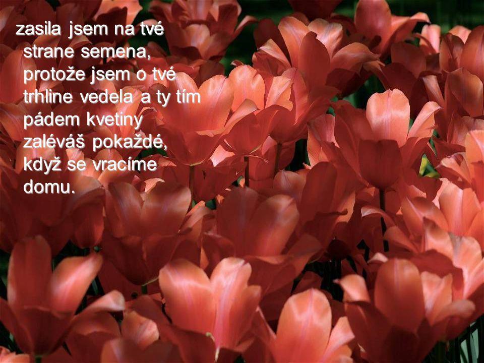 """""""Nevšiml sis, že na tvé straně cesty kvetou květy a na druhé straně ně? Stará žena sa usmála. """"Nevšiml sis, že na tvé straně cesty kvetou květy a na d"""