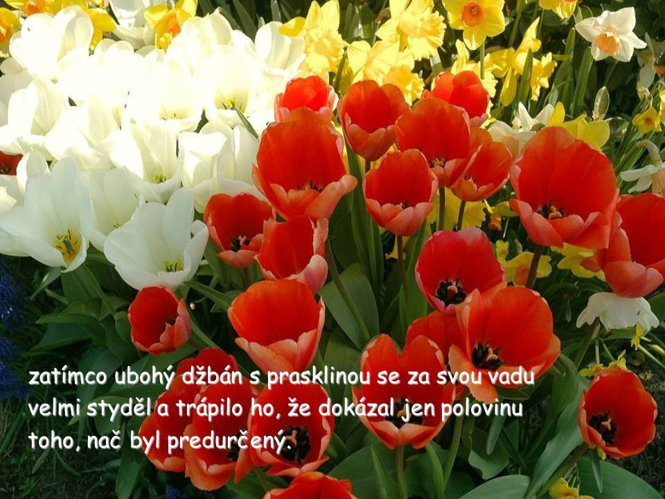 Mějte krásný den a nezapomínejte vychutnávat vůni a krásu květin na vaší straně chodníku.