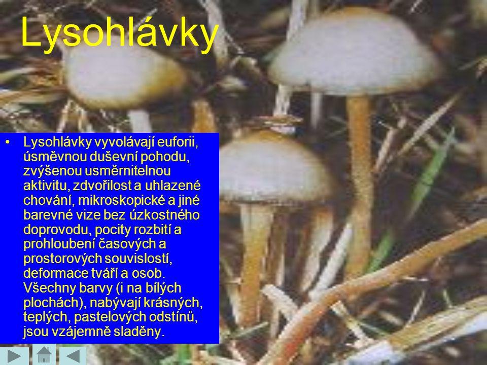 Lysohlávky Lysohlávky vyvolávají euforii, úsměvnou duševní pohodu, zvýšenou usměrnitelnou aktivitu, zdvořilost a uhlazené chování, mikroskopické a jin