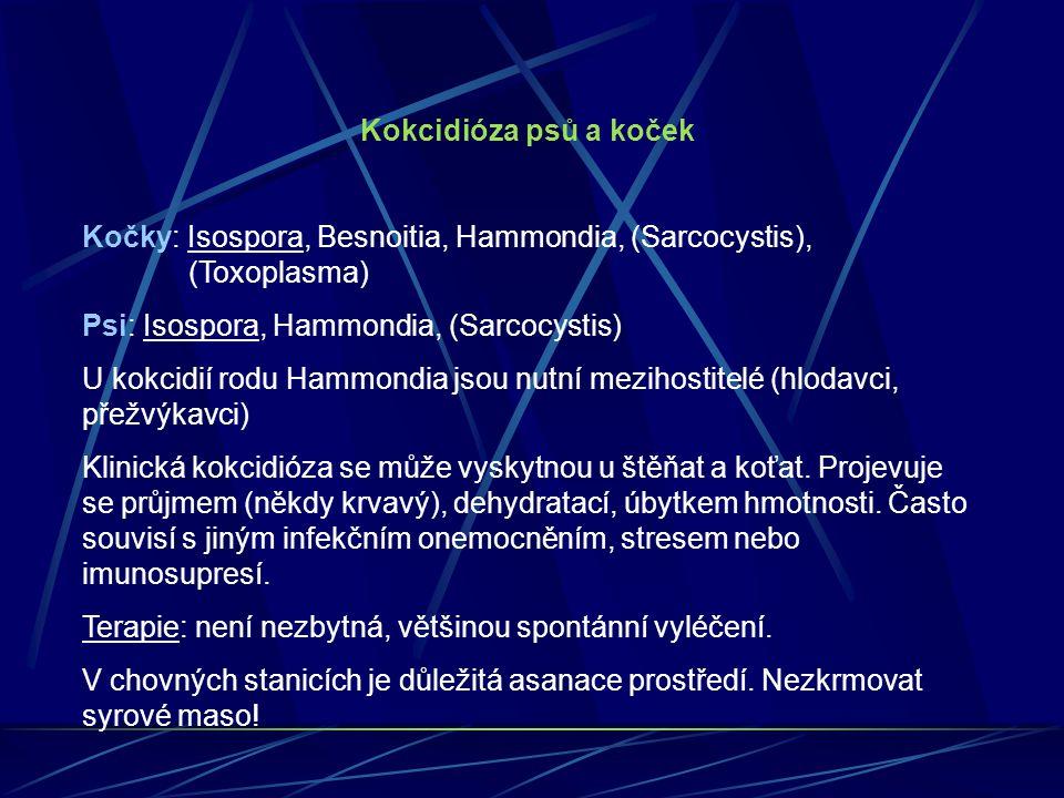 Kokcidióza psů a koček Kočky: Isospora, Besnoitia, Hammondia, (Sarcocystis), (Toxoplasma) Psi: Isospora, Hammondia, (Sarcocystis) U kokcidií rodu Hamm
