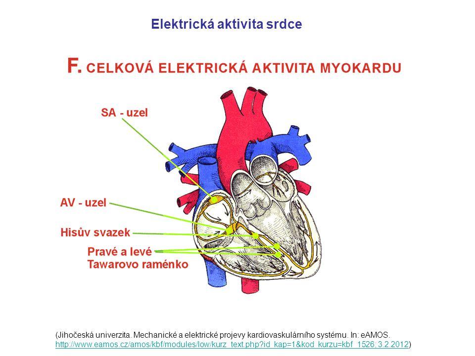 (Jihočeská univerzita.Mechanické a elektrické projevy kardiovaskulárního systému.
