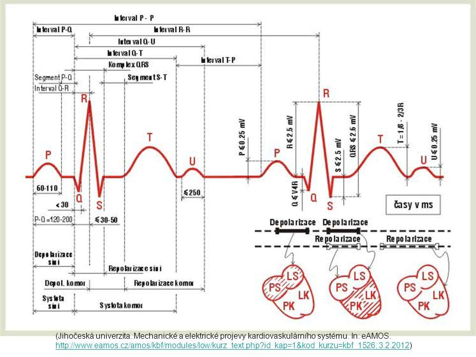 PORUCHY DEPOLARIZACE Syndrom preexcitace (W-P-W aj.)