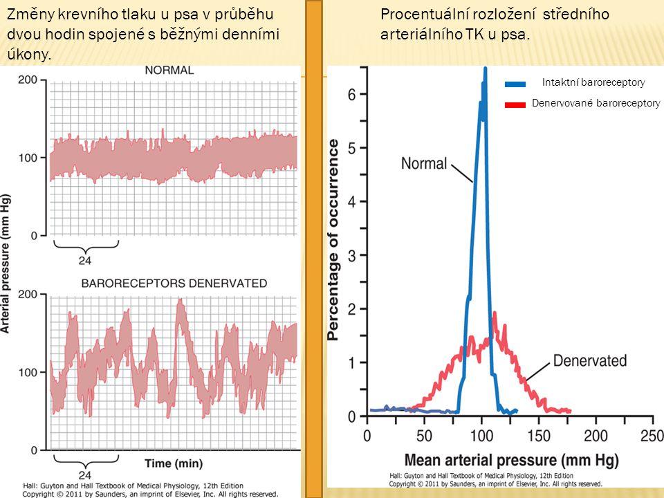 Změny krevního tlaku u psa v průběhu dvou hodin spojené s běžnými denními úkony. Procentuální rozložení středního arteriálního TK u psa. Intaktní baro