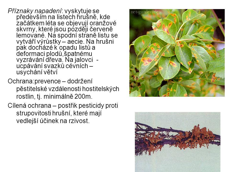 Příznaky napadení: vyskytuje se především na listech hrušně, kde začátkem léta se objevují oranžové skvrny, které jsou později červeně lemované.