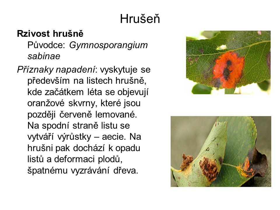 Hrušeň Rzivost hrušně Původce: Gymnosporangium sabinae Příznaky napadení: vyskytuje se především na listech hrušně, kde začátkem léta se objevují oranžové skvrny, které jsou později červeně lemované.
