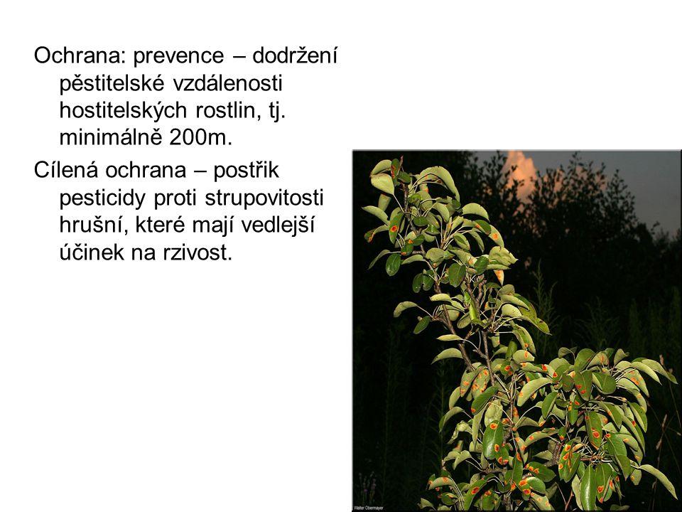 Ochrana: prevence – dodržení pěstitelské vzdálenosti hostitelských rostlin, tj.