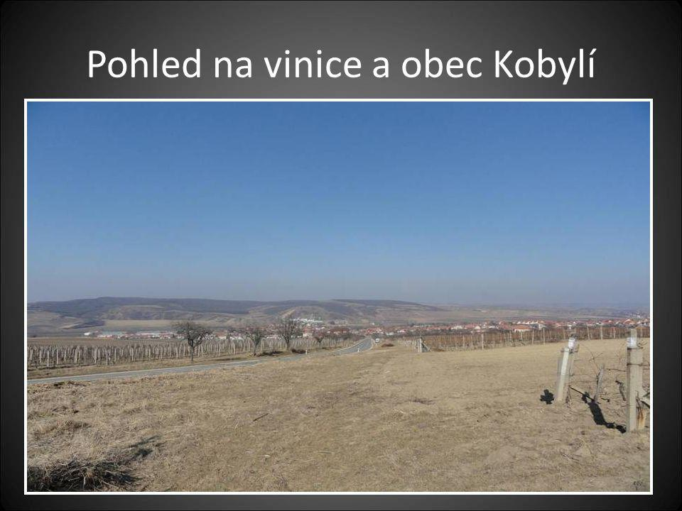 ÚVOD Návštěvu JIŽNÍ MORAVY- obcí kde se pěstuje a vyrábí víno jsme provedli 7.3.