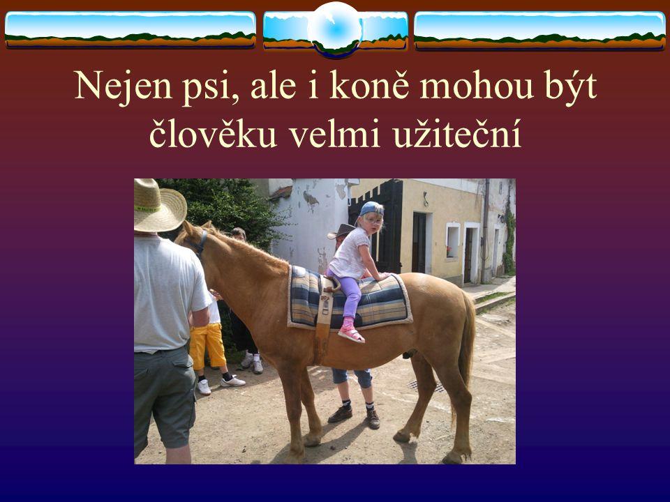 Nejen psi, ale i koně mohou být člověku velmi užiteční