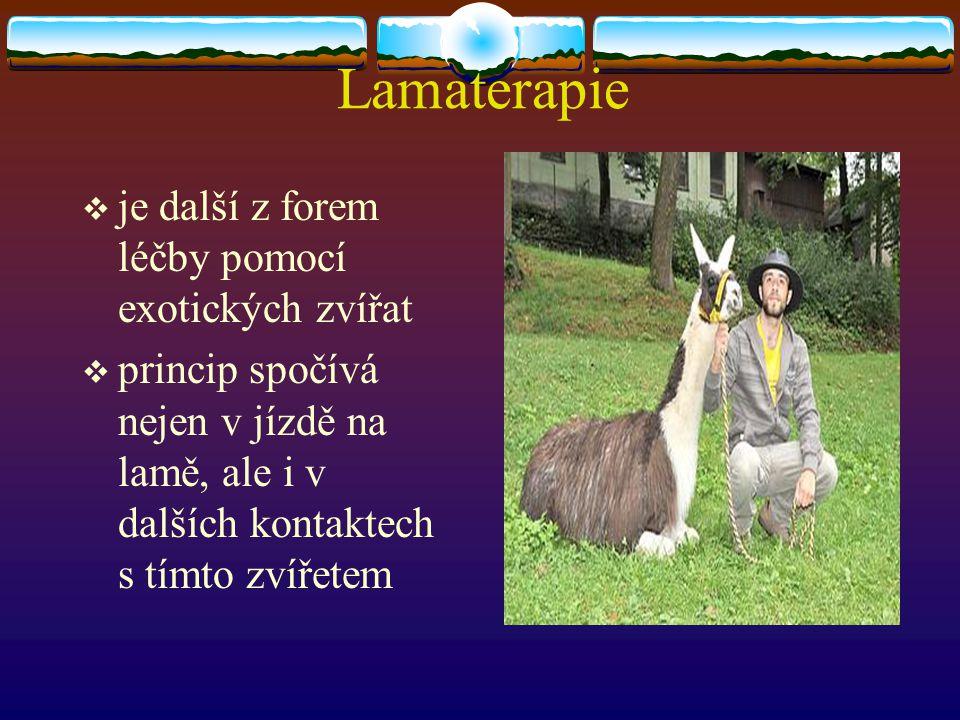 Lamaterapie  je další z forem léčby pomocí exotických zvířat  princip spočívá nejen v jízdě na lamě, ale i v dalších kontaktech s tímto zvířetem