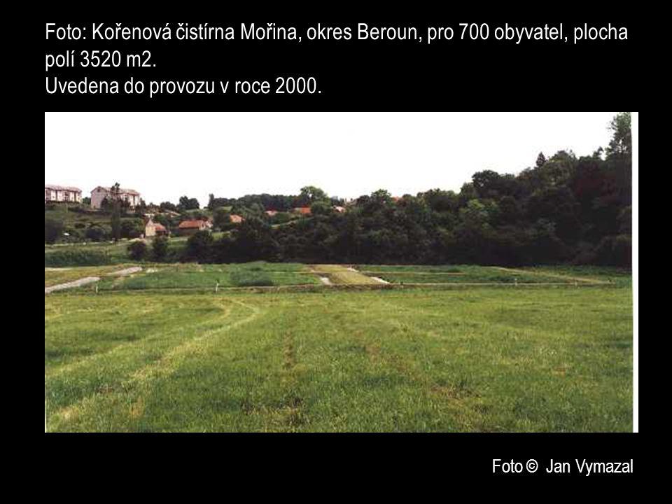 Foto: Kořenová čistírna Mořina, okres Beroun, pro 700 obyvatel, plocha polí 3520 m2.