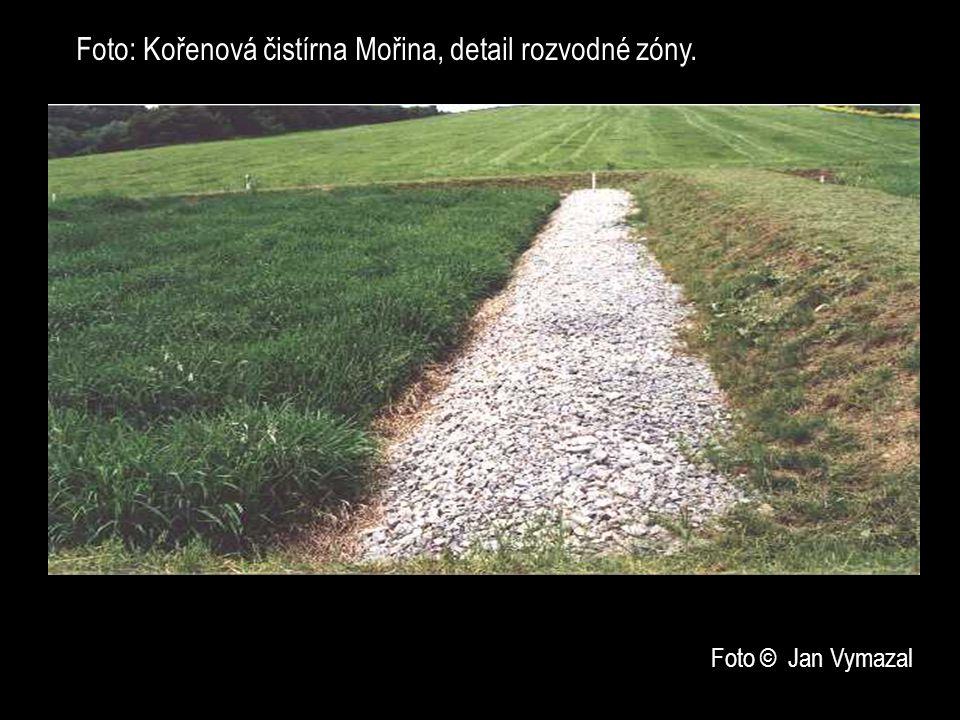 Foto: Kořenová čistírna Mořina, detail rozvodné zóny.. Foto © Jan Vymazal