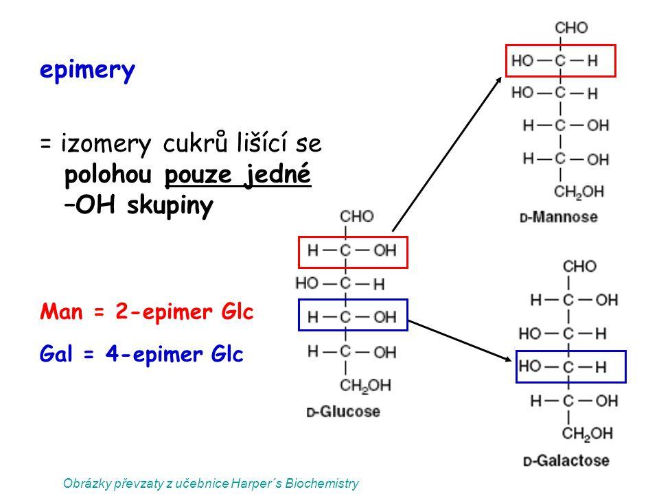 epimery = izomery cukrů lišící se polohou pouze jedné –OH skupiny Man = 2-epimer Glc Gal = 4-epimer Glc Obrázky převzaty z učebnice Harper´s Biochemis