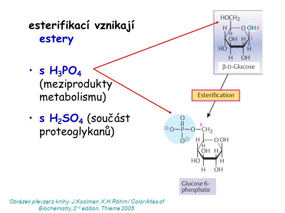 esterifikací vznikají estery s H 3 PO 4 (meziprodukty metabolismu) s H 2 SO 4 (součást proteoglykanů) Obrázek převzat z knihy: J.Koolman, K.H.Röhm / C