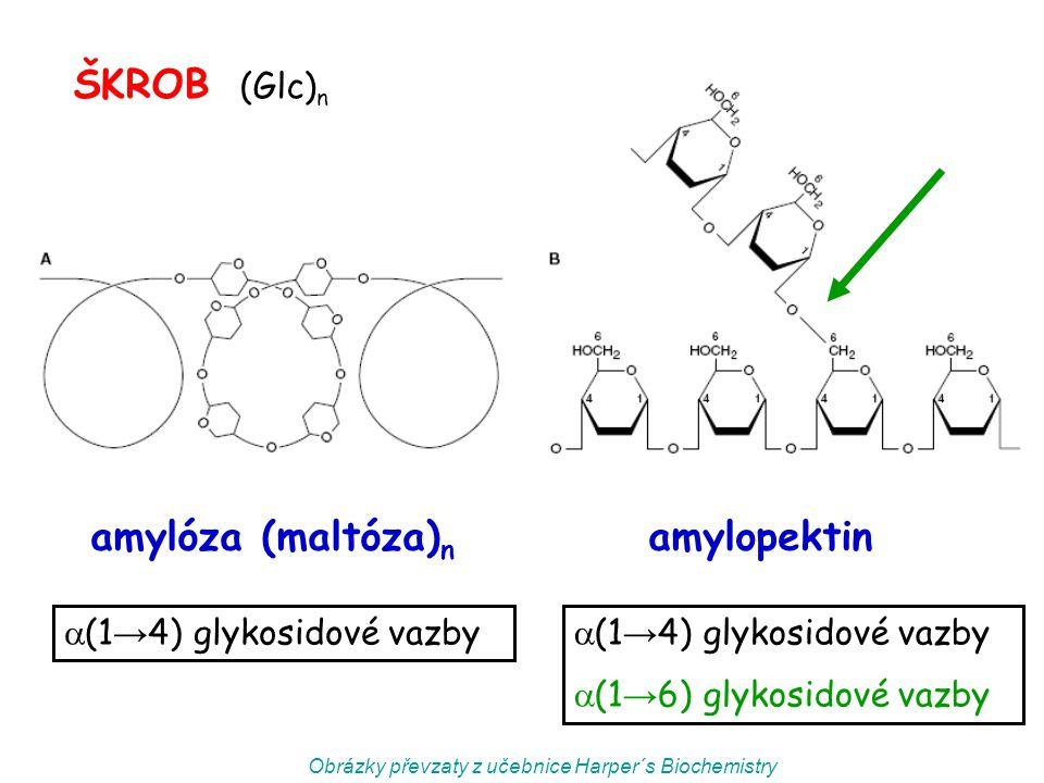 amylóza (maltóza) n amylopektin ŠKROB (Glc) n Obrázky převzaty z učebnice Harper´s Biochemistry  (1 → 4) glykosidové vazby  (1 → 6) glykosidové vazb