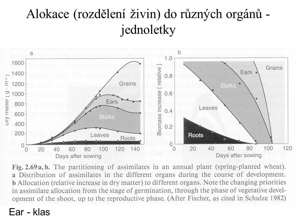Alokace (rozdělení živin) do různých orgánů - jednoletky Ear - klas