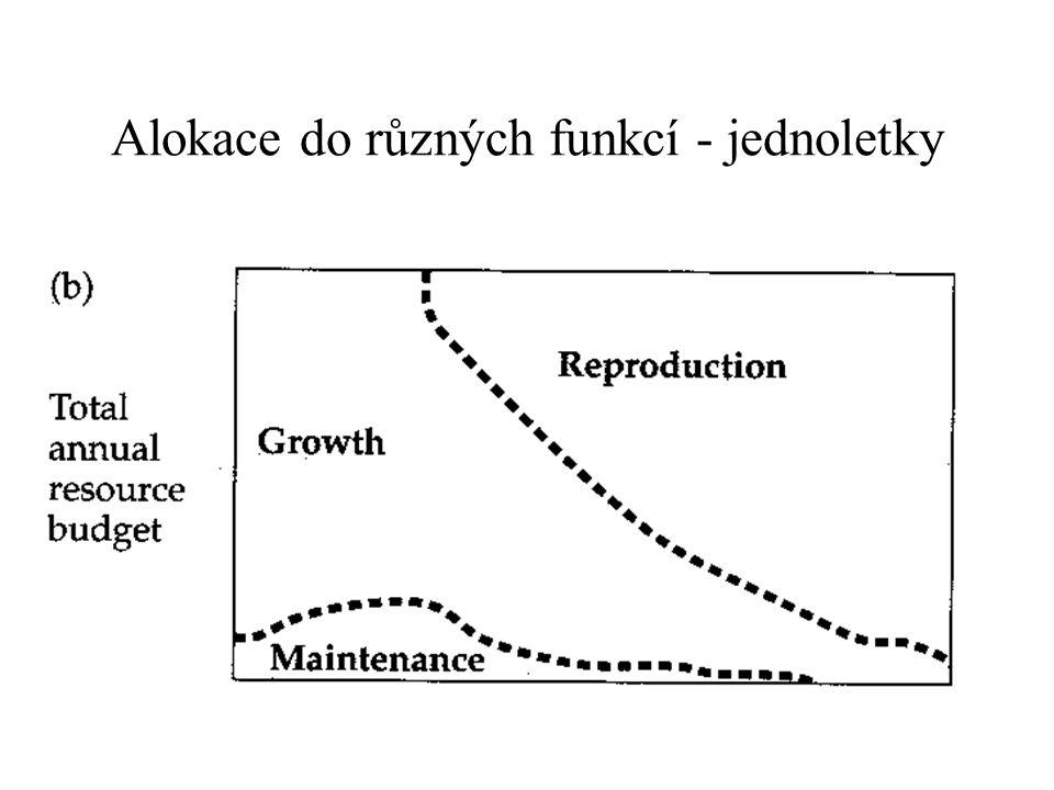 Alokace do různých funkcí - jednoletky