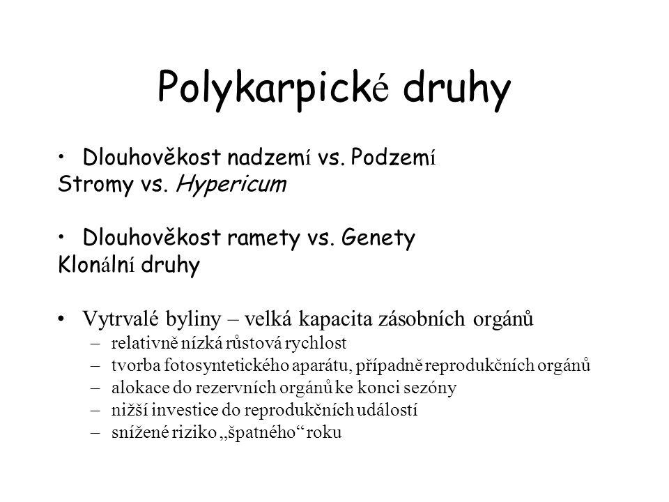 Polykarpick é druhy Dlouhověkost nadzem í vs. Podzem í Stromy vs. Hypericum Dlouhověkost ramety vs. Genety Klon á ln í druhy Vytrvalé byliny – velká k