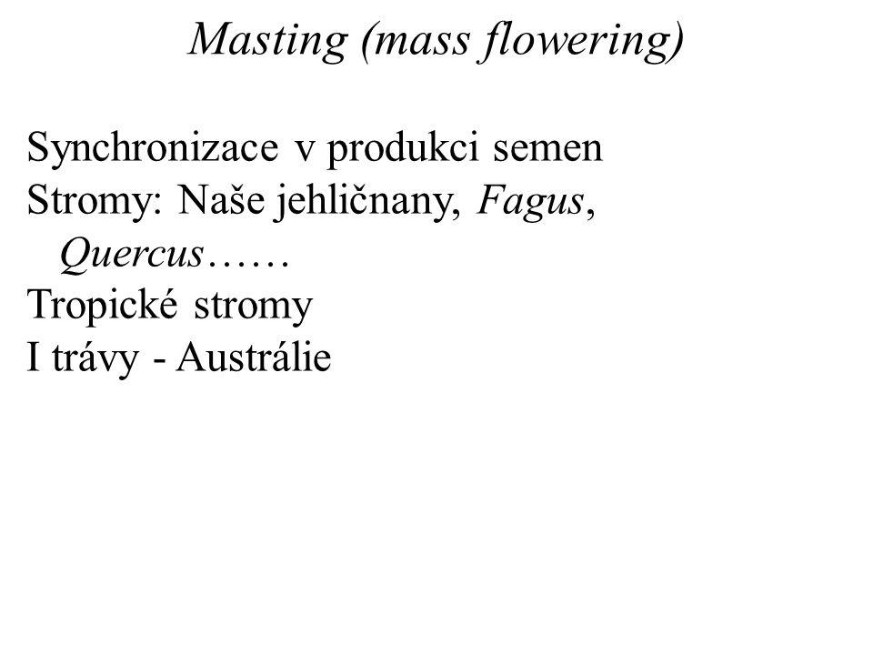Masting (mass flowering) Synchronizace v produkci semen Stromy: Naše jehličnany, Fagus, Quercus…… Tropické stromy I trávy - Austrálie