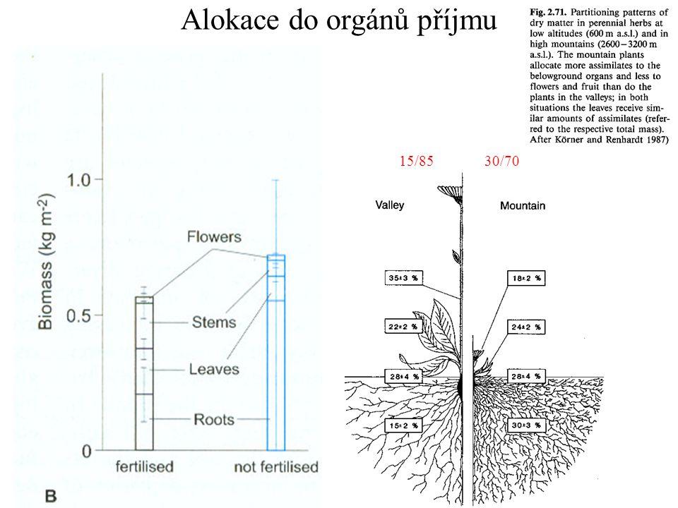 Mast effect Pinus ponderosa a) vosy, b) veverky
