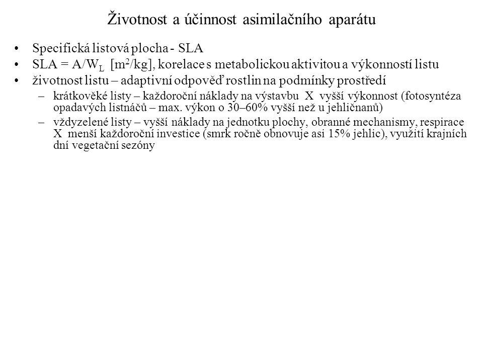 Životnost a účinnost asimilačního aparátu Specifická listová plocha - SLA SLA = A/W L [m 2 /kg], korelace s metabolickou aktivitou a výkonností listu