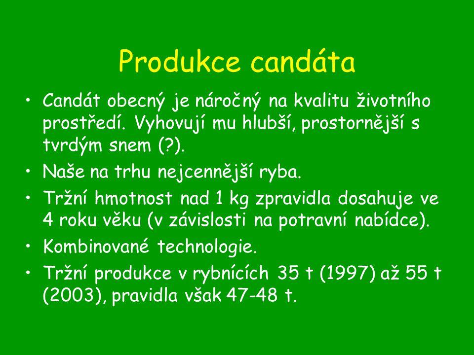 Produkce candáta Candát obecný je náročný na kvalitu životního prostředí.