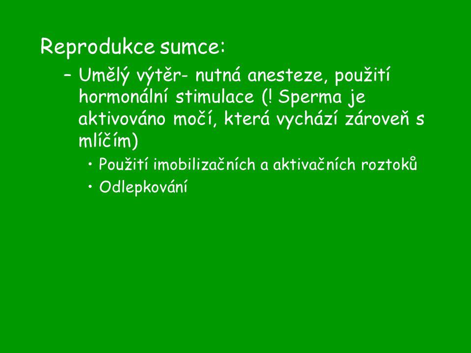 Reprodukce sumce: –Umělý výtěr- nutná anesteze, použití hormonální stimulace (.