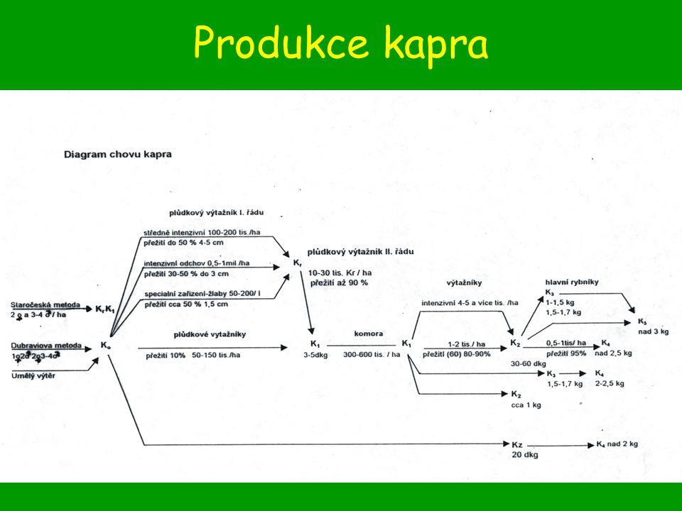 Produkce pstruha duhového Charakteristika, požadavky na podmínky prostředí Rychlost růstu –Pd 1/4 4 – 6 cm –Pd 1 10 – 15 cm ; –Pd 2 250 – 400 g (14 – 18 měsíců věku)