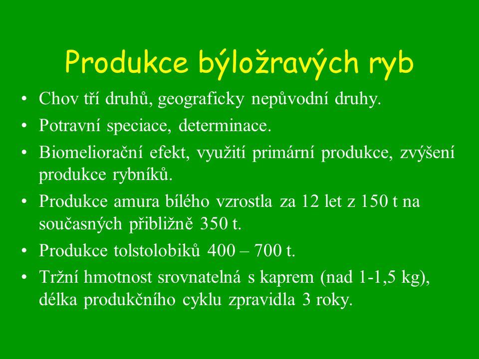 Produkce býložravých ryb Chov tří druhů, geograficky nepůvodní druhy.
